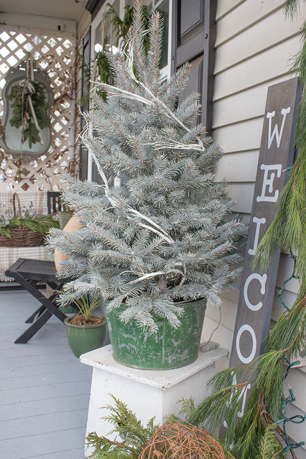 mini white pine Christmas tree in bucket, exterior decorating ideas