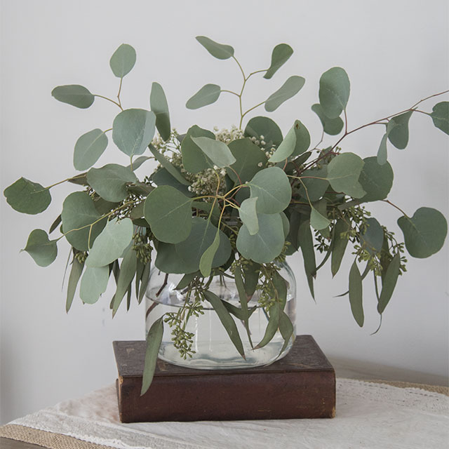 Eucalyptus essential oil has many benefits, find out what they are here.