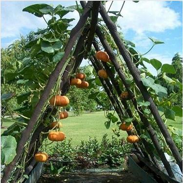 10 DIY Garden Trellis Ideas