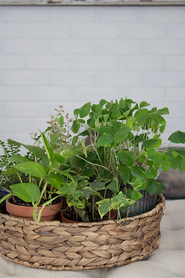 basket of air-purifying  houseplants that are easy to grow and purify the air