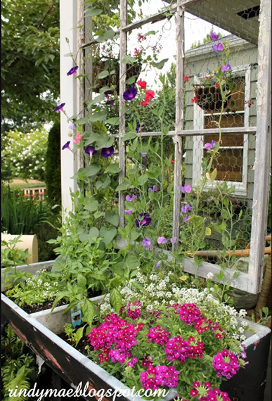 window frame planter -ucycled trellis - backyard ideas