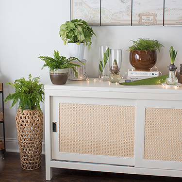 Plant Therapy – Low Light Houseplants