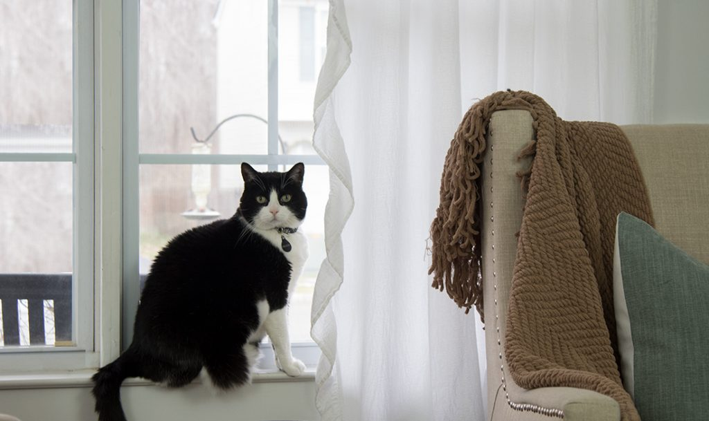 cat on windowsill with white curtains