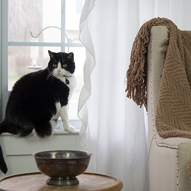 How To Steam Curtains – Step Away From the Iron
