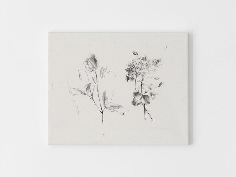 vintage sketch of two flowers wall decor - printable botanical prints