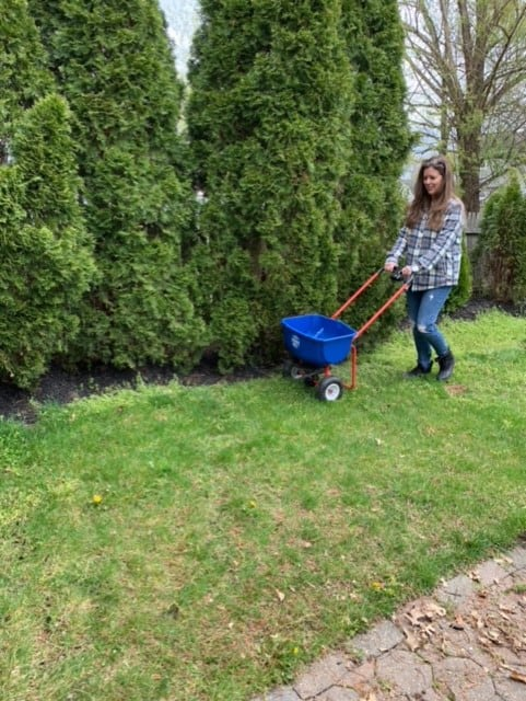 how-to-spread-grass-seed - lawn care for beginners