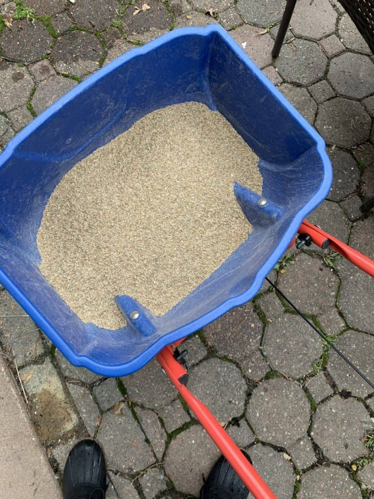 lawn care for beginners - how to use grass seed