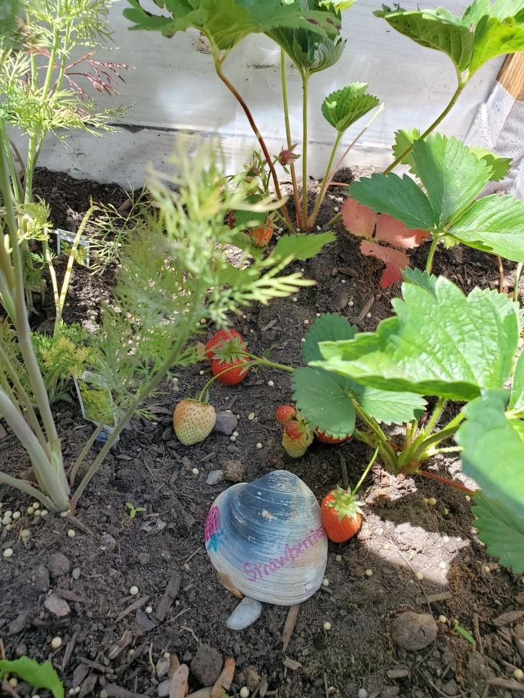 DIY beach herb garden markers